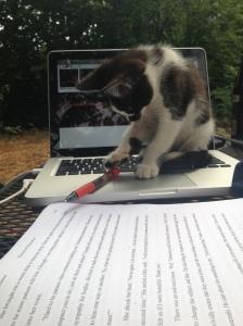 Editor cat ponders manuscript